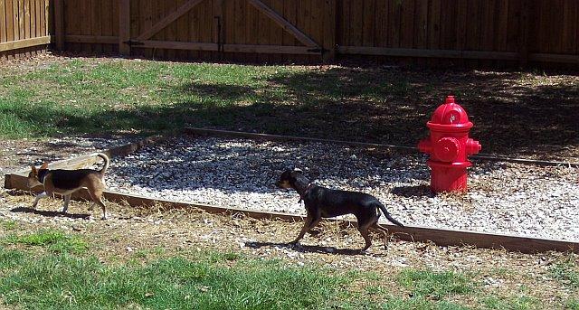 dog-hydrant